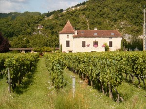 A vineyard in Cahors